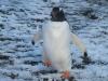 thumbs antarkticheskij poluostrov 04 Антарктический полуостров