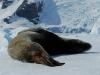 thumbs antarkticheskij poluostrov 10 Антарктический полуостров