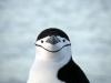 thumbs antarkticheskij poluostrov 101 Антарктический полуостров