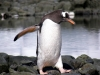 thumbs antarkticheskij poluostrov 104 Антарктический полуостров