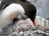 thumbs antarkticheskij poluostrov 108 Антарктический полуостров