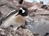 thumbs antarkticheskij poluostrov 109 Антарктический полуостров