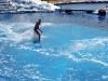 Аквапарк Тенерифе. Катание на спине дельфина