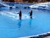Аквапарк Тенерифе. Танец дельфинов