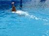 Аквапарк Тенерифе. Игры дельфинов с мячом