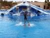 Аквапарк Тенерифе. Шоу дельфинов