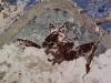 Батран. Шестикрылый серафим в Богоявленской церкви
