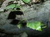 База гидросамолетов на Копанском озере