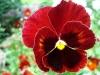thumbs botanicheskij sad im v l komarova 03 Ботанический сад имени В.Л. Комарова