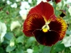 thumbs botanicheskij sad im v l komarova 04 Ботанический сад имени В.Л. Комарова