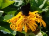 thumbs botanicheskij sad im v l komarova 14 Ботанический сад имени В.Л. Комарова