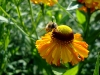 thumbs botanicheskij sad im v l komarova 18 Ботанический сад имени В.Л. Комарова