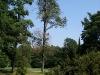 Территория Ботанического сада имени В.Л. Комарова