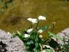 thumbs botanicheskij sad mihas 05 Ботанический сад Михас