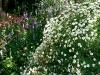 thumbs botanicheskij sad mihas 16 Ботанический сад Михас