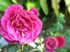 thumbs botanicheskij sad mihas 18 Ботанический сад Михас