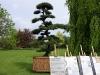 thumbs botanicheskij sad v prage 01 Ботанический сад в Праге