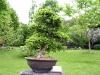 thumbs botanicheskij sad v prage 13 Ботанический сад в Праге