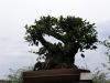 thumbs botanicheskij sad v prage 16 Ботанический сад в Праге