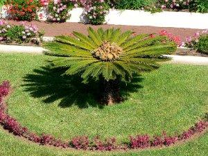 10846  300x225 jardines de la victoria 10 Сад Виктория (Jardines de la Victoria)