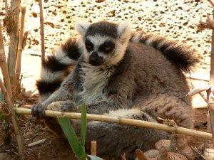 3102  300x225 park obezjan 37 Парк Обезьян (Monkey Park)