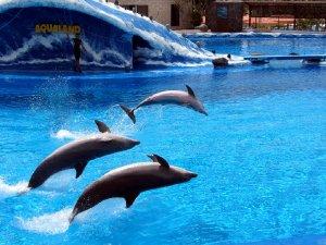 4005  300x225 aqualand tenerife 12 Аквапарк Тенерифе