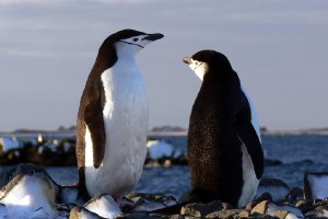 8400  300x225 antarkticheskij poluostrov 93 Антарктический полуостров