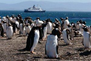 8888  300x225 falklands islands 027 Фолклендские острова