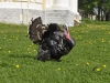 thumbs cerkov svyatoj zhivonachalnoj troicy 15 Церковь Святой Живоначальной Троицы