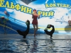 thumbs delfinarij koktebel 03 Дельфинарий Коктебель