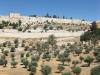 Долина Кедрон
