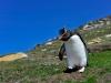 Фолклендские острова. Остров Сандерс