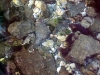 Феодосия. На дне моря