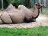 thumbs harkovskij zoopark 17 Харьковский зоопарк