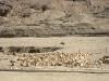 thumbs hram caricy hatshepsut 06 Храм царицы Хатшепсут
