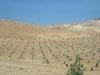 thumbs iudejskaya pustynya 15 Иудейская пустыня