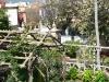 thumbs jardines de la victoria 03 Сад Виктория (Jardines de la Victoria)