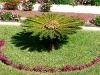 thumbs jardines de la victoria 10 Сад Виктория (Jardines de la Victoria)