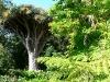 Сад Виктория (Jardines de la Victoria)