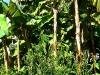 thumbs jardines de la victoria 15 Сад Виктория (Jardines de la Victoria)