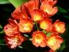 thumbs jardines de la victoria 16 Сад Виктория (Jardines de la Victoria)