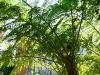thumbs jardines de la victoria 18 Сад Виктория (Jardines de la Victoria)
