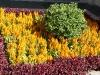 thumbs jardines de la victoria 20 Сад Виктория (Jardines de la Victoria)