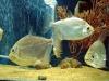 Кара-Даг. Морской аквариум