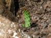 Кара-Даг. Дикорастущий кактус