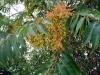 Кара-Даг. Растения на Кара-Даге