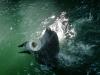 Кара-Даг. Карадагский дельфинарий