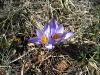 Караби-Яйла. Первые цветы