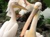 thumbs kievskij zoopark 07 Киевский зоопарк