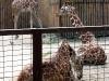 thumbs kievskij zoopark 16 Киевский зоопарк